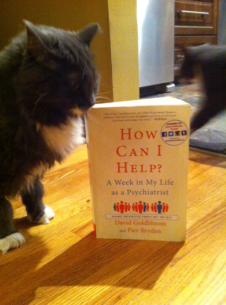 Book Review: How Can I Help? by David Goldbloom and Pier Bryden
